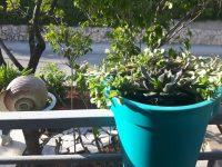 cvijece-prednji-balkon